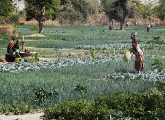 Vegetable production in Burkina Faso // Foto by Remi Nono-Womdim for GlobalHort Image Library, CC BY-NC 2.0 License