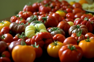 Tons on Tomatoes // By Suzy Morris, CC BY-NC 2.0 License
